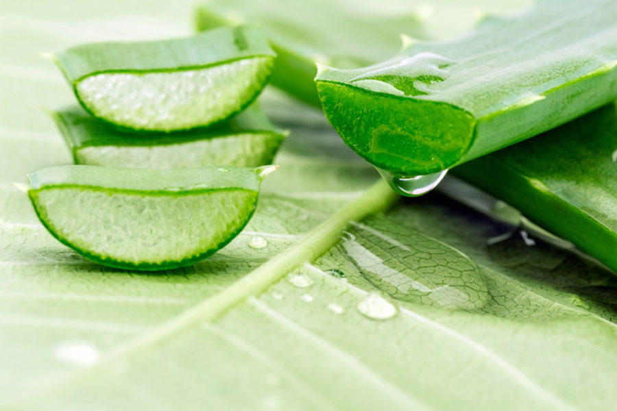 Aloe-Vera-Hair-Benefits-Loss-Home-Remedy