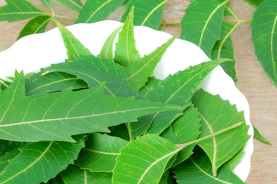 Benefits-Of-Neem-Leaves-For-Skin-Hair-And-Health